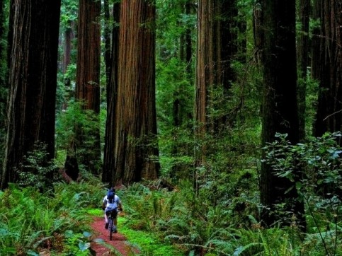 cycleinredwoods